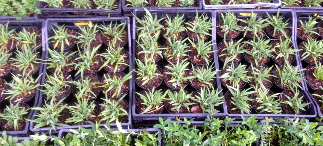 Vivaio arte del giardino vendita piante da esterni for Piante da vivaio