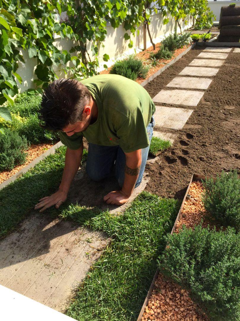 Tappeto erboso arte del giardino sistemi di realizzazione for Prato erboso a rotoli